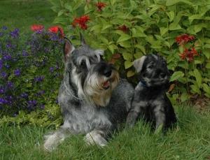 Lia and Blue 1